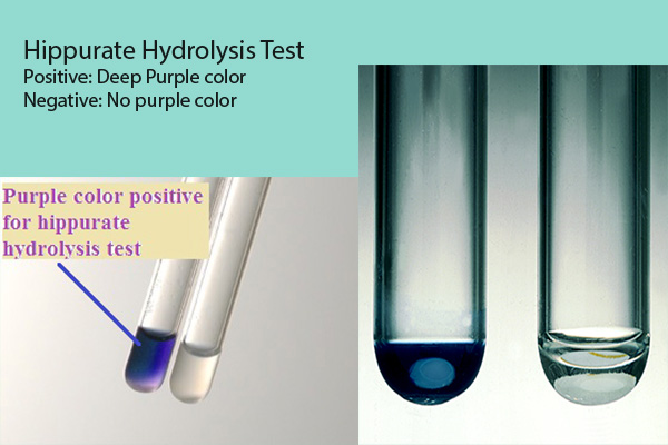 Hippurate hydrolysis test